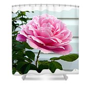 Royal Kate Rose Shower Curtain by Will Borden