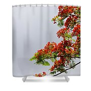 Royal Poinciana Tree Shower Curtain