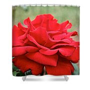 Royal Red Rose Shower Curtain