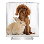 Ruby Cavalier King Charles Spaniel Pup Shower Curtain