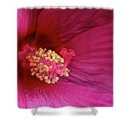 Ruby Hibiscus Shower Curtain
