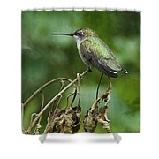 Ruby On The Perch Shower Curtain