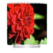 Ruby Red Dahlia Shower Curtain