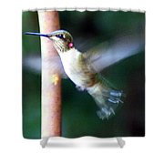Ruby Throated Hummer In Flight Shower Curtain