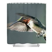 Ruby-throated Hummingbird - Hover Shower Curtain