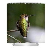 Ruby-throated Hummingbird - Hummingbird - Content Shower Curtain