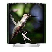Ruby-throated Hummingbird - Just Beautiful Shower Curtain