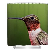 Ruby-throated Hummingbird - Macho Man Shower Curtain