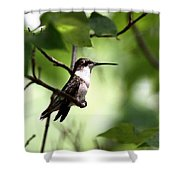 Ruby-throated Hummingbird - Shade Shower Curtain