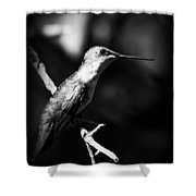 Ruby-throated Hummingbird - Signature Shower Curtain