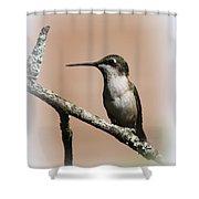 Ruby-throated Hummingbird - Totally Innocent Shower Curtain