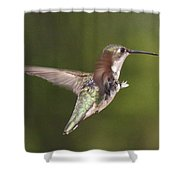 Ruby-throated Hummingbird - Twirling Shower Curtain