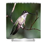 Ruby-throated Hummingbird - Hanging Low Shower Curtain