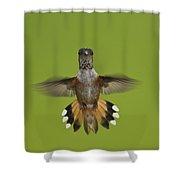 Rufous Hummingbird Selasphorus Rufus Shower Curtain