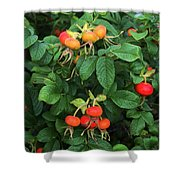 Rugosa Rose With Rose Hips Shower Curtain