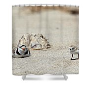 Run Little One  Piping Plover Shower Curtain