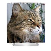 Runcius- My King Kitty Enjoying The Sunshine Shower Curtain