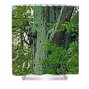 Rural Trees Close Up Shower Curtain