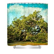Ruskin Oak Shower Curtain