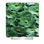 Russian Silverberry Leaf  Shower Curtain