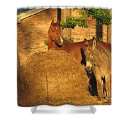 Rusty And Brown Sugar Shower Curtain