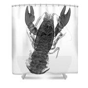 Rusty Crayfish Shower Curtain