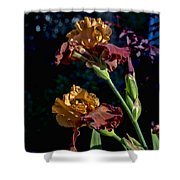 Rusty Petals Shower Curtain
