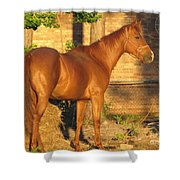 Rusty Standing Proud Shower Curtain