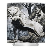 Sabre-toothed Tigers Shower Curtain by Richard Hook