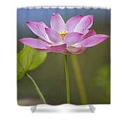 Sacred Lotus Nelumbo Nucifera Flower Shower Curtain