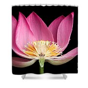 Sacred Lotus Nelumbo Nucifera Shower Curtain