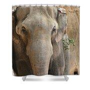 Sad Elephant Shower Curtain