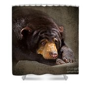 Sad Sun Bear Shower Curtain