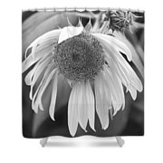 Sad Sunflower Black And White Shower Curtain