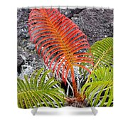 Sadleria Fern Hawaii Shower Curtain