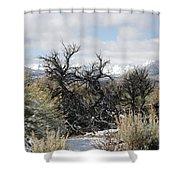 Sagebrush And Snow Shower Curtain