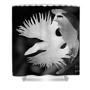Sagi-so Or Crane Orchid Named Japanese Egret Flower Shower Curtain