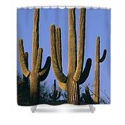 Saguaro Cacti In Desert Landscape Shower Curtain