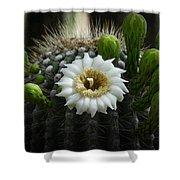 Saguaro Cactus Blooms  Shower Curtain