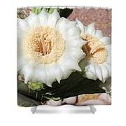 Saguaro Cactus Flowers Shower Curtain