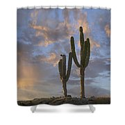 Saguaro Carnegiea Gigantea Cacti, Cabo Shower Curtain