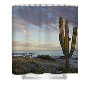 Saguaro Carnegiea Gigantea Cactus Shower Curtain