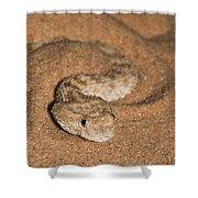 Sahara Sand Viper Cerastes Vipera Shower Curtain