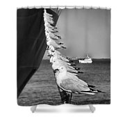 Sailors Shower Curtain