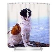 Saint Bernard In Cornwell Shower Curtain