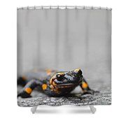 Salamander Shower Curtain