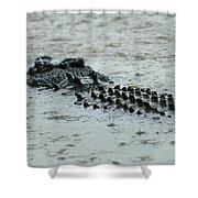 Salt Water Crocodile 3 Shower Curtain