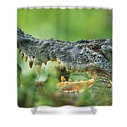 Saltwater Crocodile Crocodylus Porosus Shower Curtain