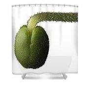 Salvia Polystachya Sprout Shower Curtain