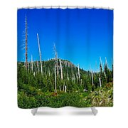 Sand Blasted Trees  Shower Curtain